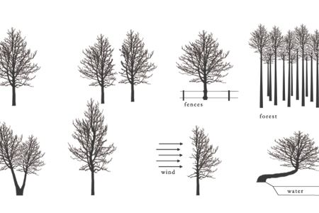 04 AUSTRIA- MISCHER'TRAXLER- THE IDEA OF A TREE
